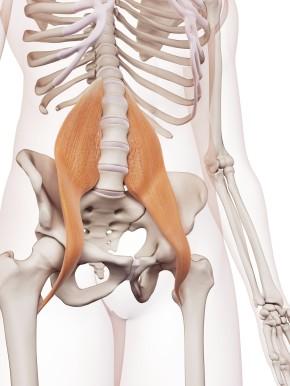 psoas muscle.jpg